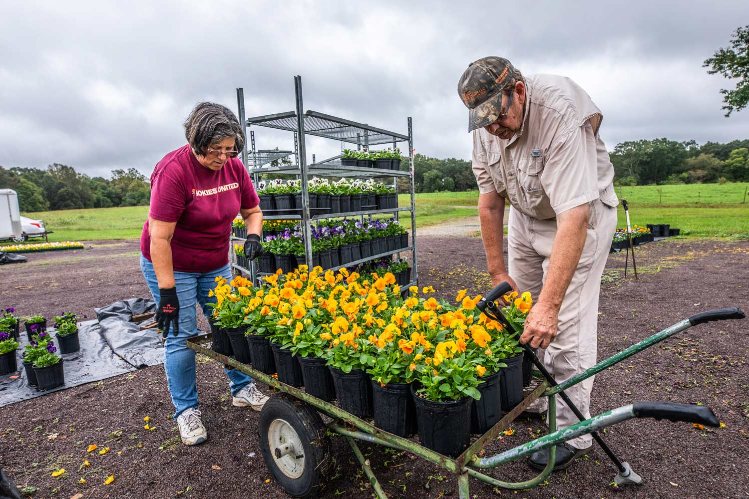 A woman and man lean over a cart filled with planters of orange flowers.