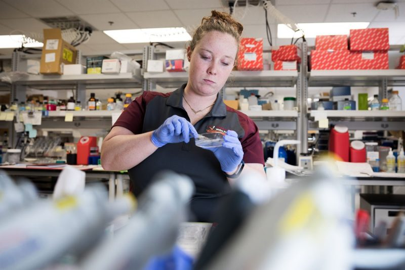 Female graduate student works in a lab with a petri dish in her purple gloved hands.