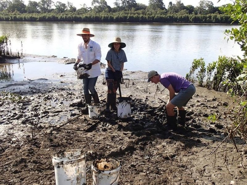 Three students planting mangroves on Brisbane River
